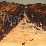 brownies_photo site