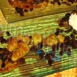 ananas caramelise rhum plancha_photo wall